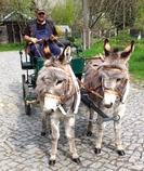 Max und Paul, zwei jungen Wallache wurden in 12 Wochen Training die Grundlagen den harmonischen Miteinanders beim Führen im Rahmen einer Bodenarbeitsausbildung vermittelt. Anschließend ging es in klei
